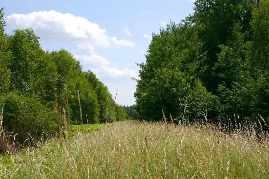 Kruki (dojazd od ul. Nowowiejskiej) - kierunek Grabowo