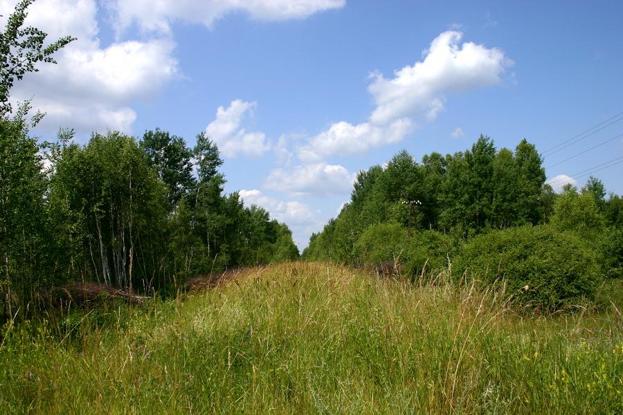Kruki (dojazd od ul. Nowowiejskiej) - kierunek Wielbark
