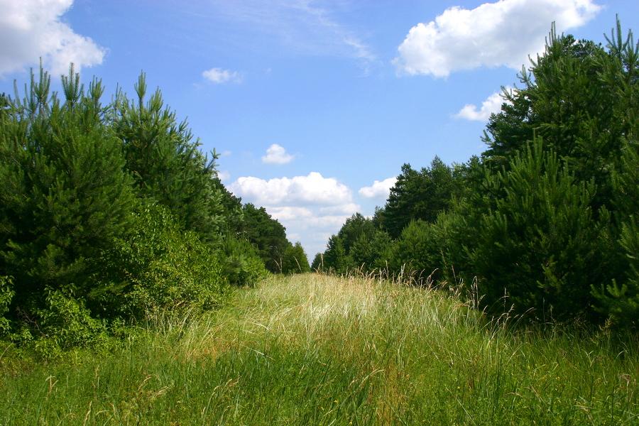 Przejazd w lesie Żebry (k. Grabowo)