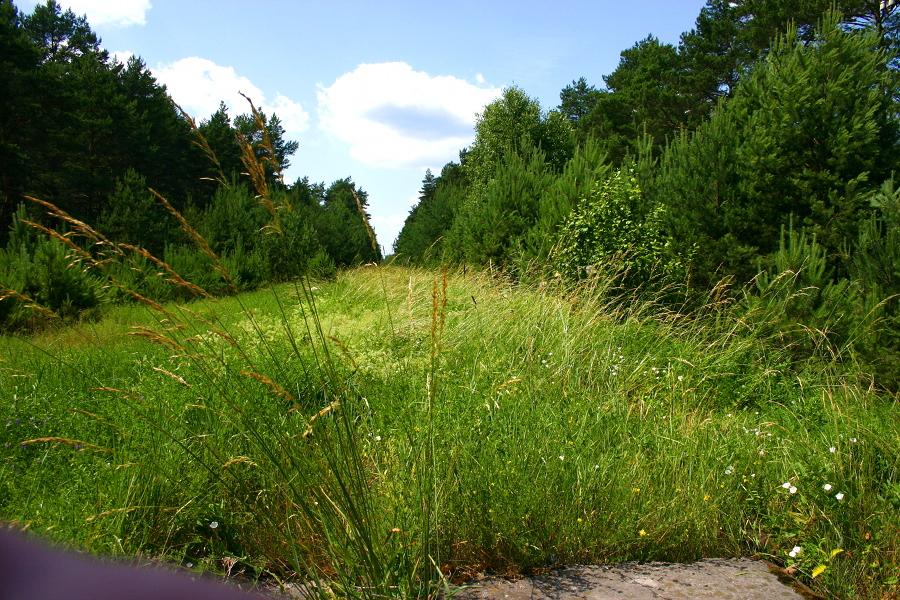 Przejazd w lesie Żebry (k. Wielbark)