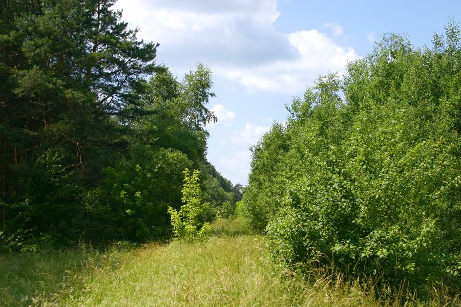 Żebry - na rozejściu z DW544 (k. Wielbark)
