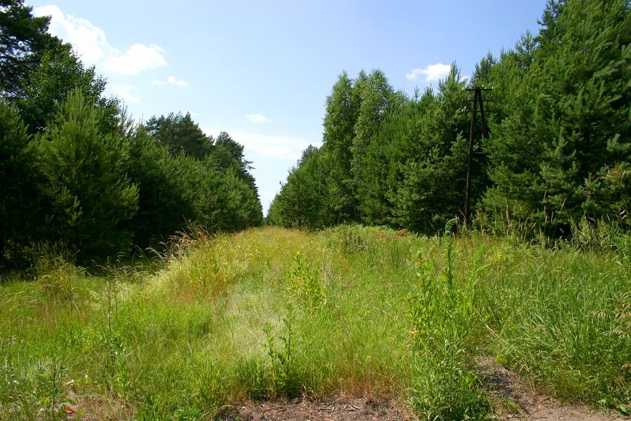 Z przejazdu na drodze lokalnej od DW544 do Rżańca (k. Wielbark)
