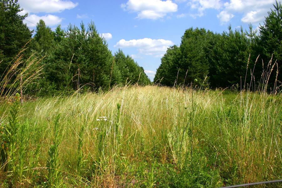 Z przejazdu na drodze lokalnej od DW544 do Rżańca (k. Grabowo)