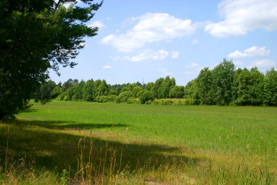 Widok z DW544 w miejscu rozejścia linii i DW