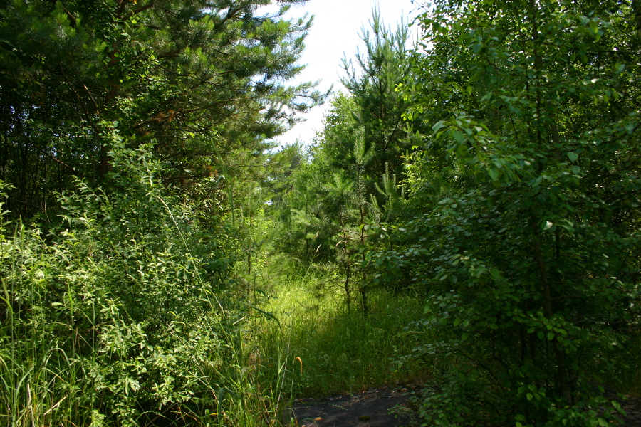 Przejazd w Lesie na szlaku Zabiele - Jastrząbka