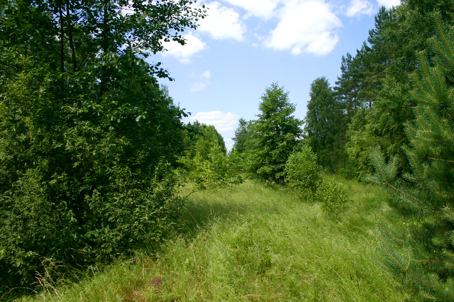 Szlak Zabiele - Jastrząbka