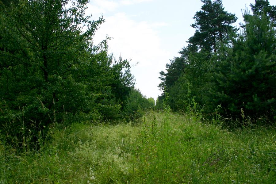 Przejazd we wsi Dłutówka