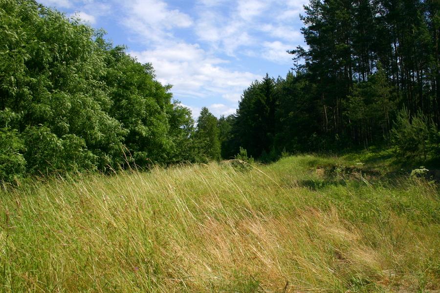 Przejazd na drodze lokalnej pomiędzy Jastrząbką a Gaczyskami