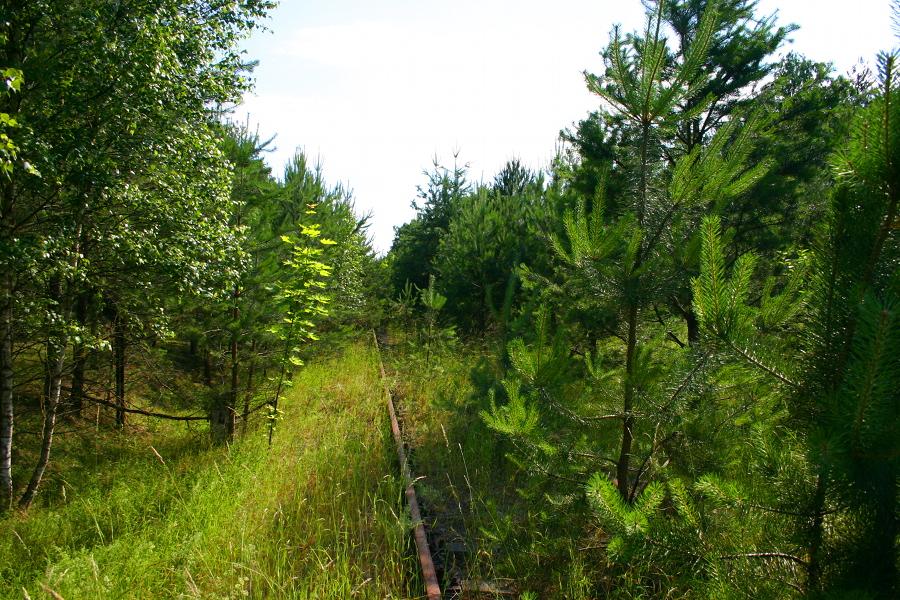 W lesie przed Wielbarkiem